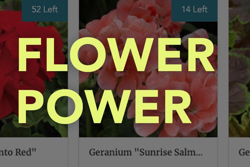 Flower Sale Fundraiser
